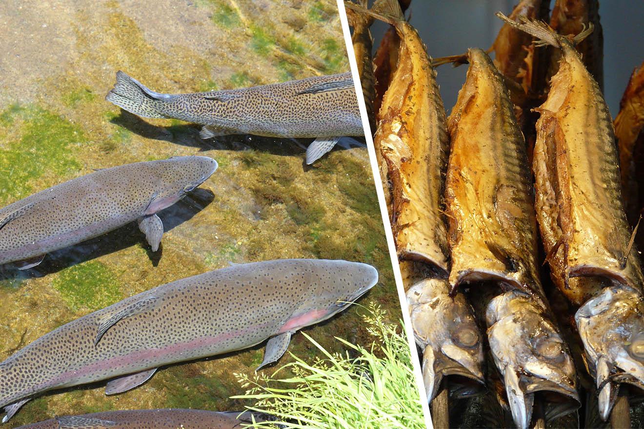 Alarmierender Rekord: Weltweiter Fischkonsum auf Höchststand