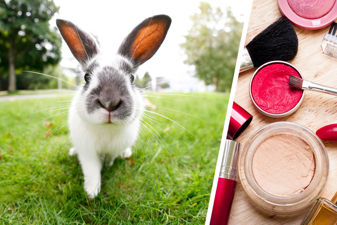 5 Beispiele für Tierversuche in der Kosmetikindustrie
