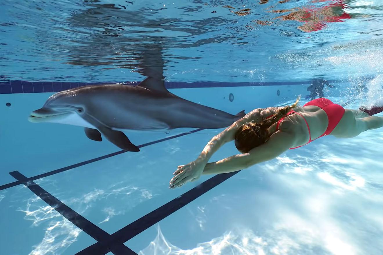 Robotic Dolphin könnte Gefangenschaft von Delfinen beenden