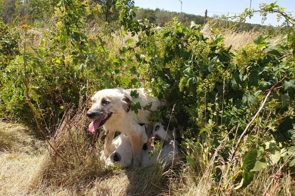 Hunde in Rumänien