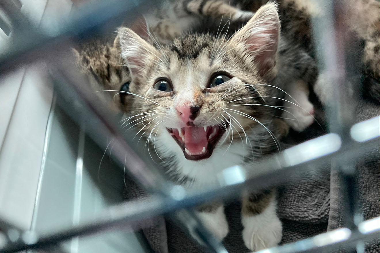 Illegaler Handel aufgedeckt: Katzenbabys auf offener Straße verkauft