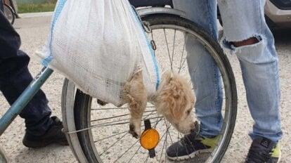 Hund haengt in Plastiktuete vom Fahrrad