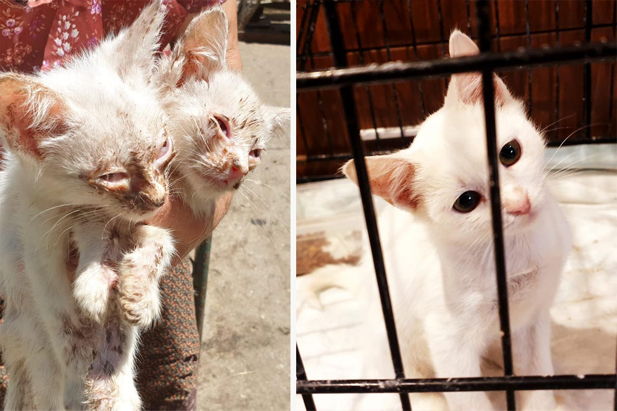Katzen Mila und Sini