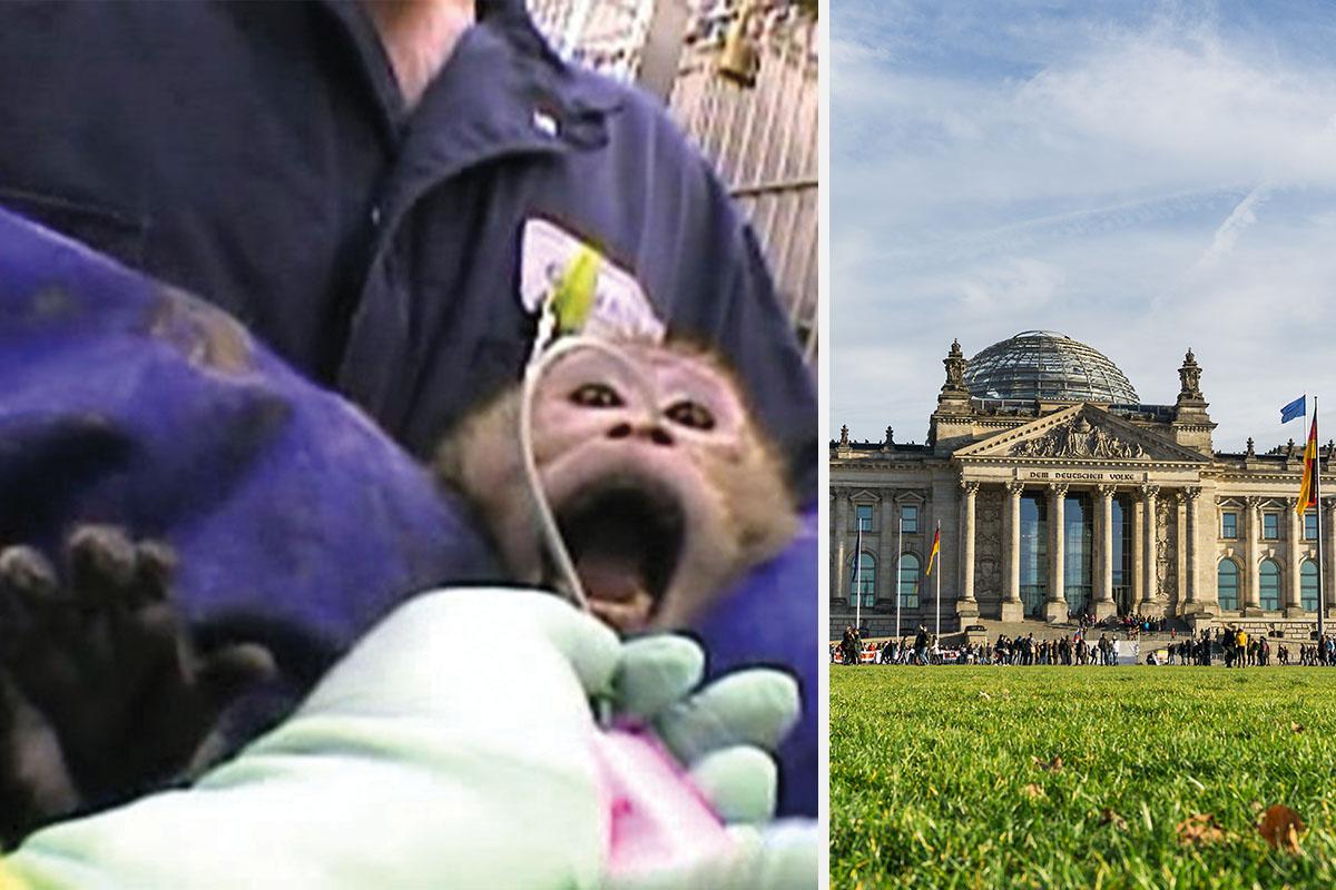 Die größten Tierversuchsskandale Deutschlands