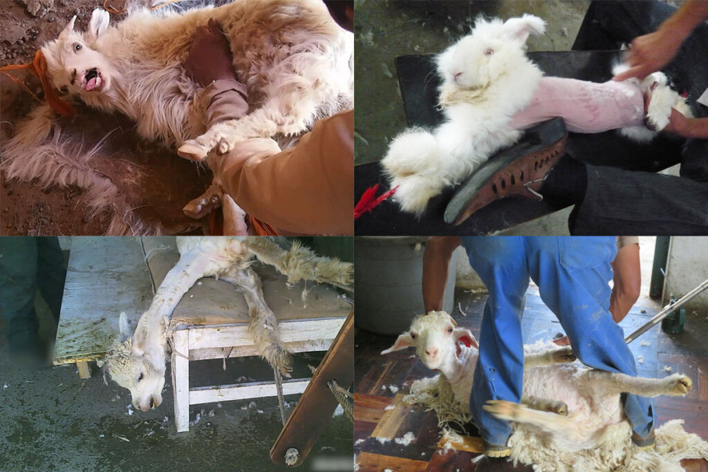 Tiere die in der Wollindustrie leiden