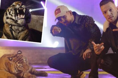 Capital Bra und Azet Musikvideo mit Tiger