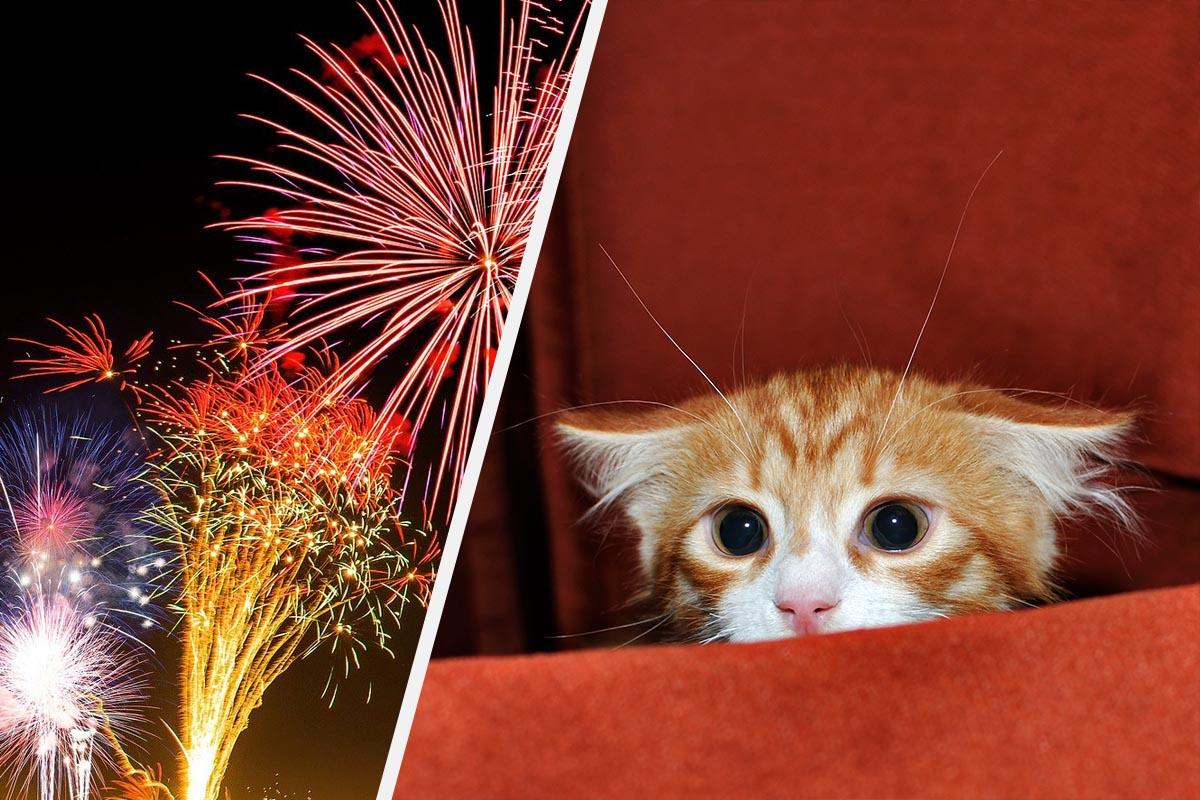 Feuerwerke in Deutschland verbieten – jetzt Petition unterschreiben!
