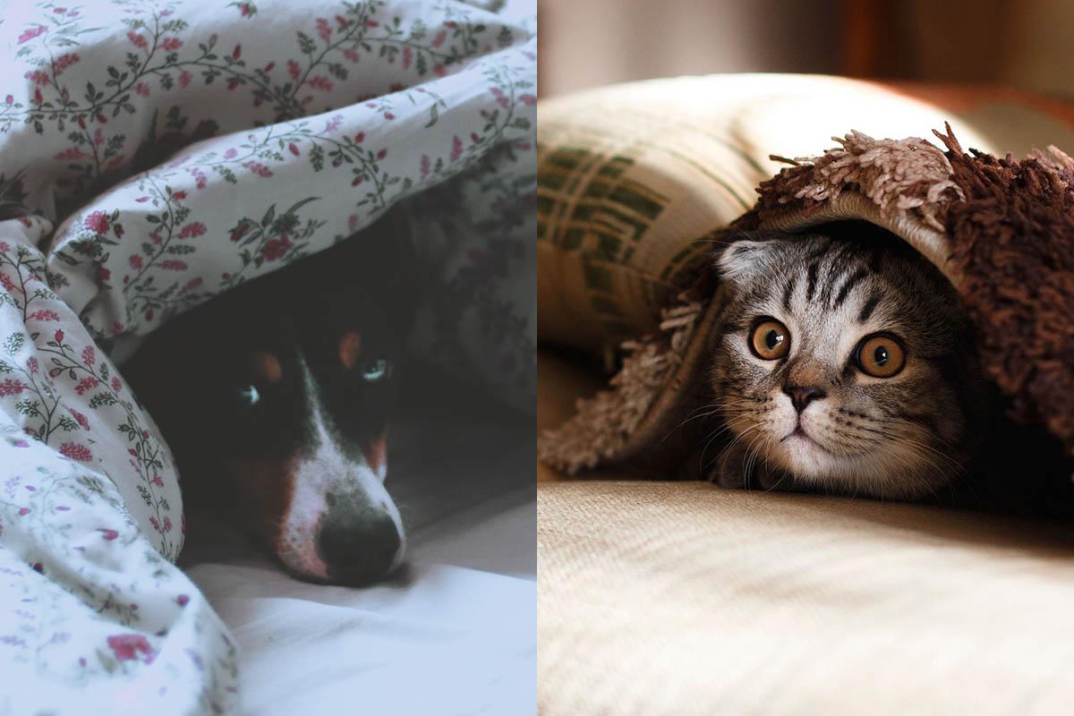 Silvester-Feuerwerk stresst Tiere: So beruhigen Sie Hund und Katze
