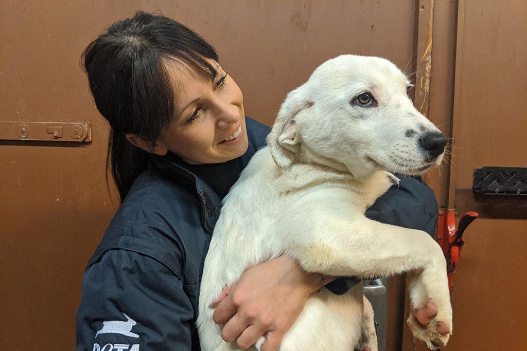 weißer Hund auf dem Arm einer Frau