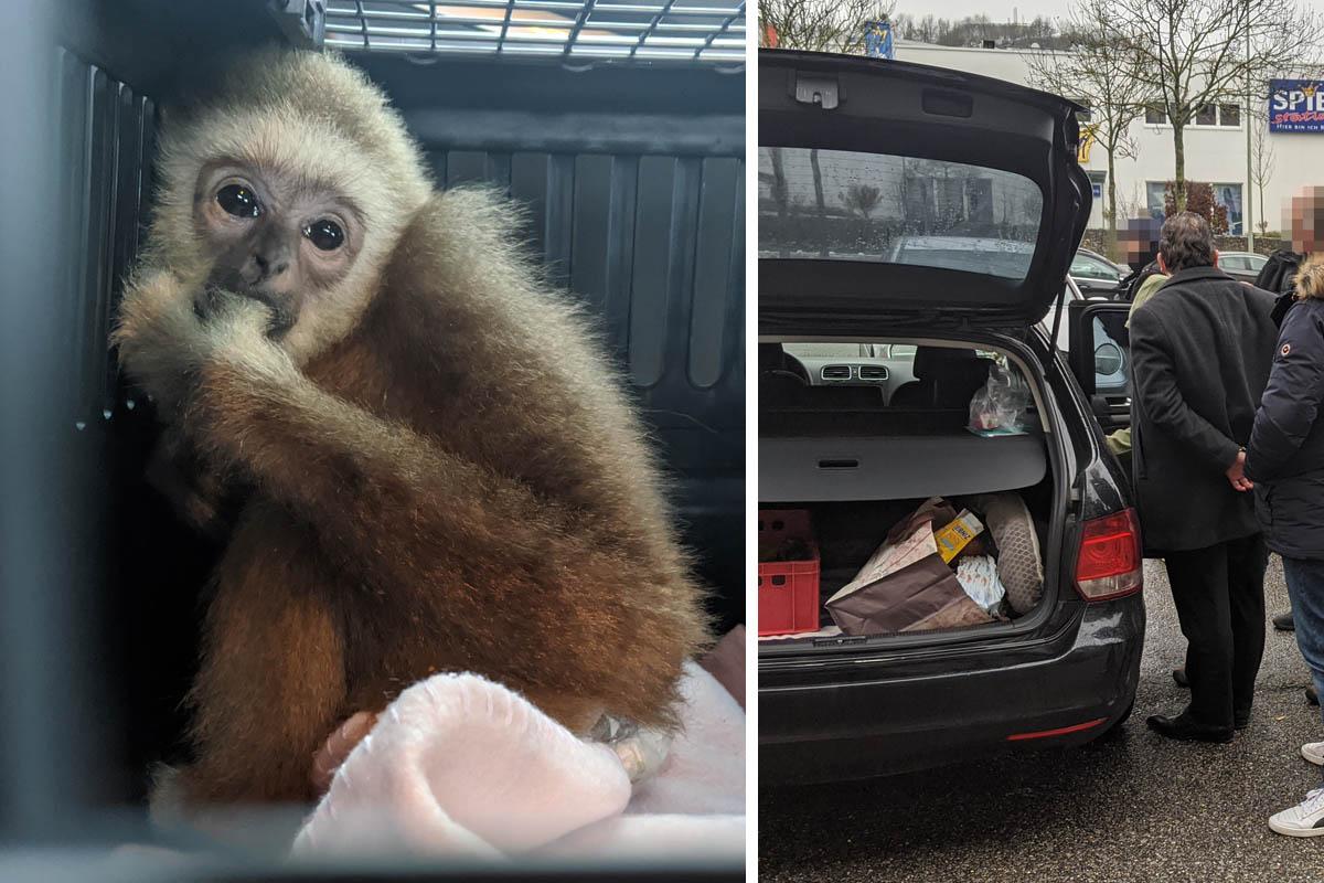 Aufgedeckt: Affenbaby auf Parkplatz verkauft!
