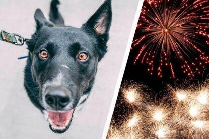 Collage Hund und Feuerwerk