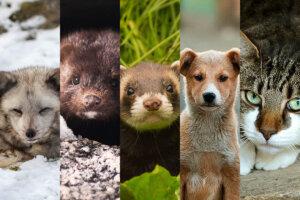 Verschiedene Tiere mit Pelz