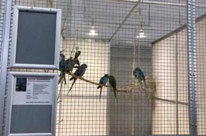 Voegel im Kaefig eines Zoohandels