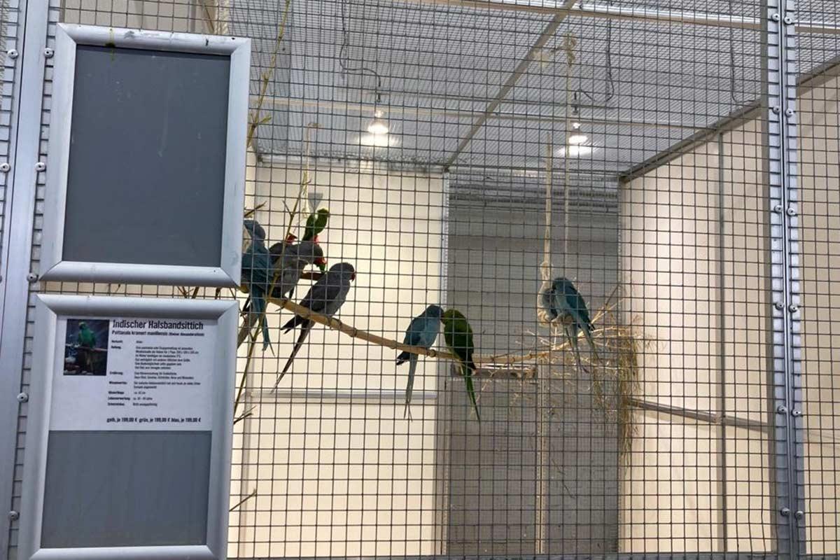 Das dubiose Geschäft mit Tieren: Zoo Zajac in Duisburg