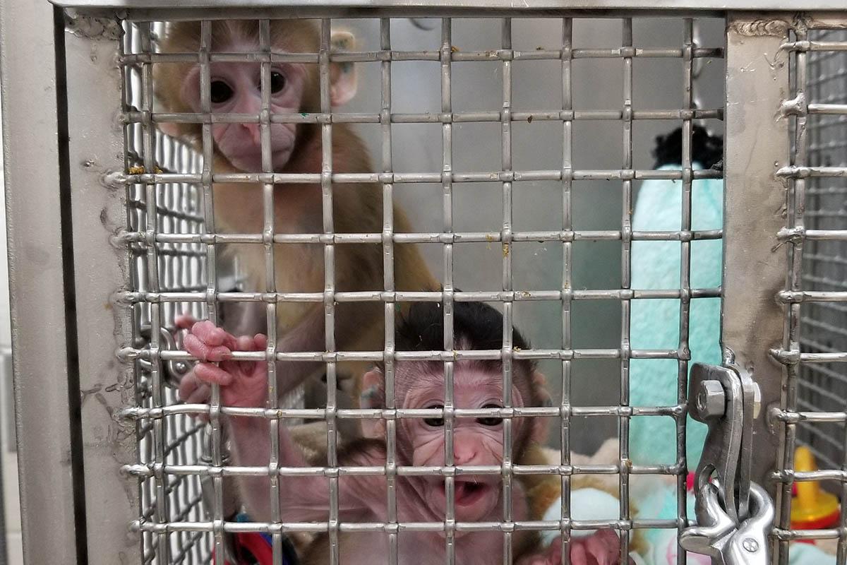 Stoppt Tierversuche! Tiere haben Gefühle