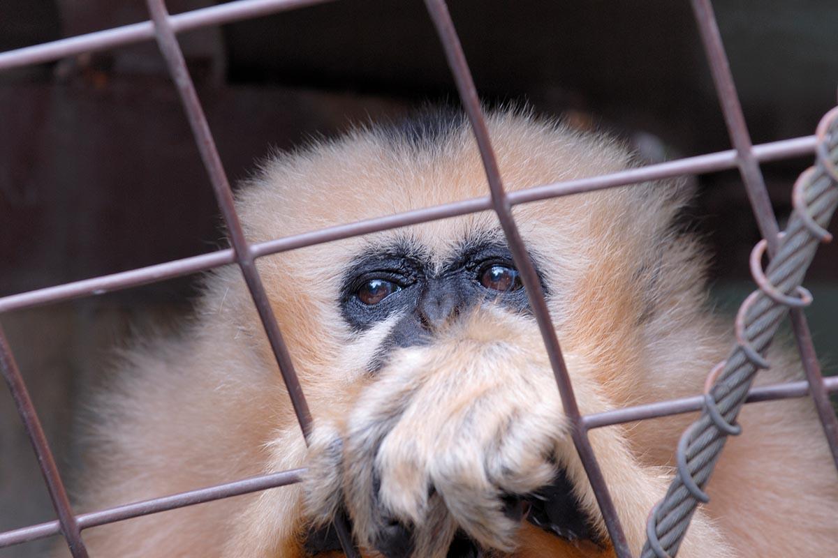 Zoos: Gefängnisse für Tiere | Informationen über Artenschutz & Co.