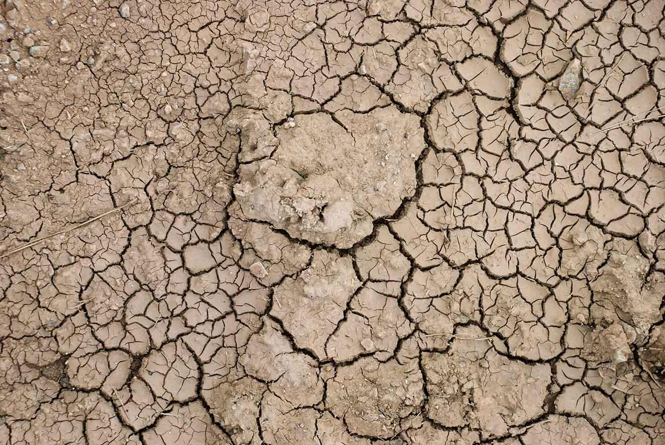 Bodendegradation: Landwirtschaftliche Tierhaltung zerstört den Boden