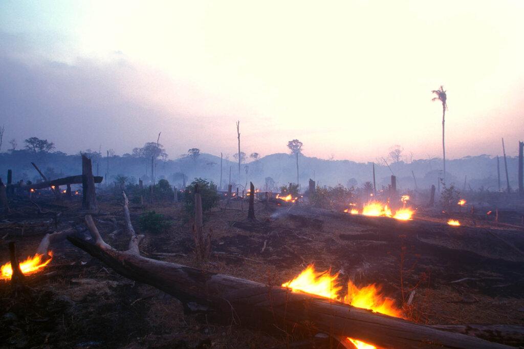 Gerodeter brennender Wald
