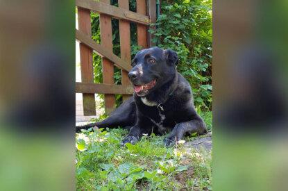Hund Lilly liegt im Garten