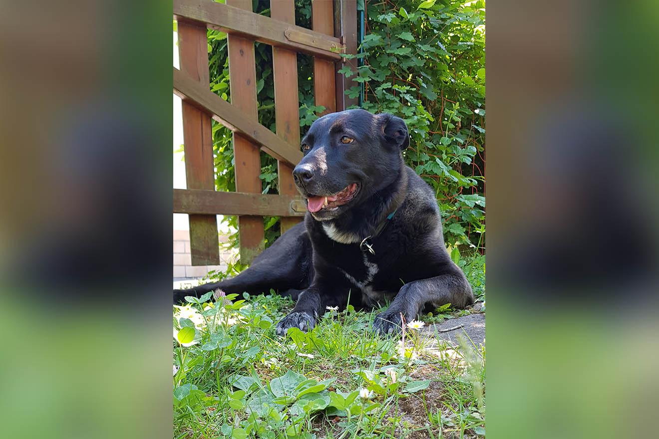 Lilly: Als Wachhund ausgedient und in die Tötungsstation abgeschoben