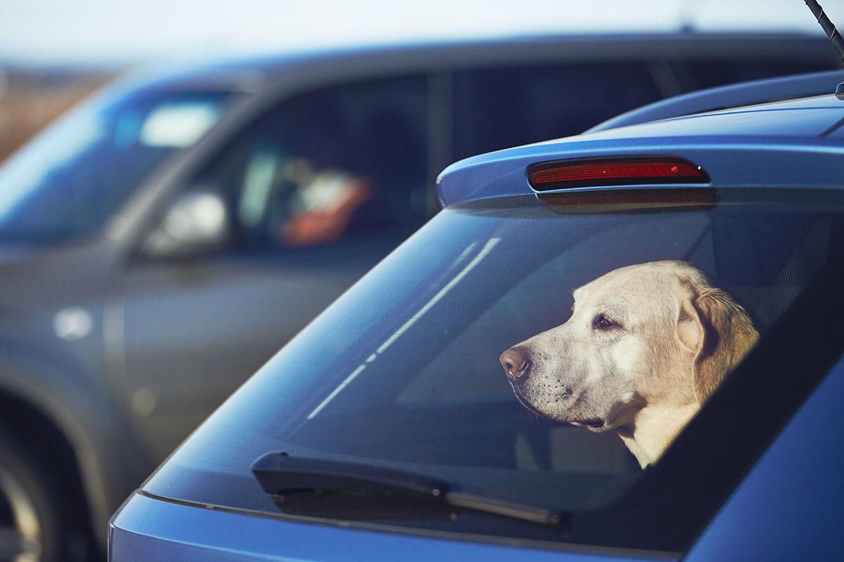 Verfahren eingestellt: Ehepaar ließ Hund bei Hitze im Auto in Höxter