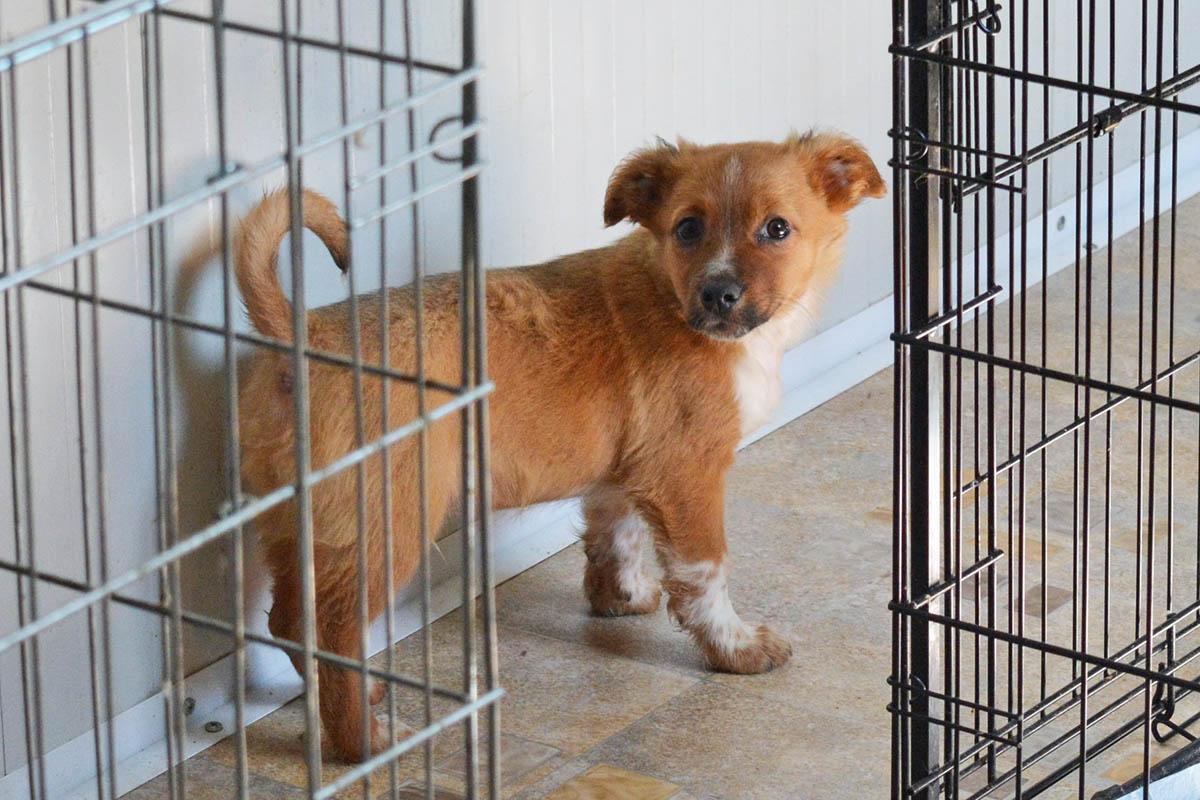 Hund aus dem Auslandstierschutz aufnehmen – wichtige Tipps