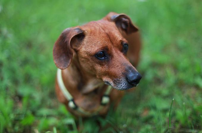 Demenz bei Hunden und Katzen – So helfen Sie Ihrem Vierbeiner