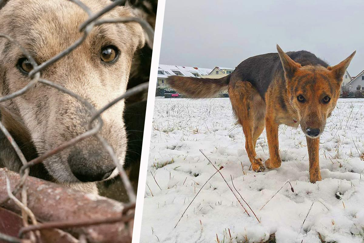 PETA HELPS ROMANIA schenkt zahlreichen Tieren ein neues Zuhause