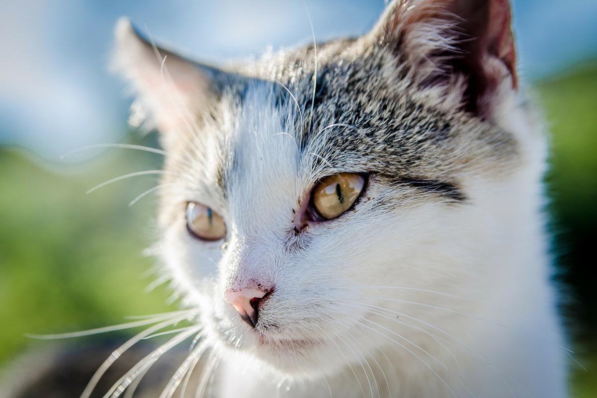 Katze krank? 7 Anzeichen, dass es Ihrer Katze schlecht geht
