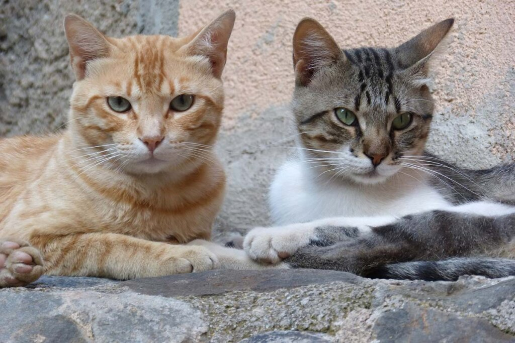 Zwei liegende Katzen