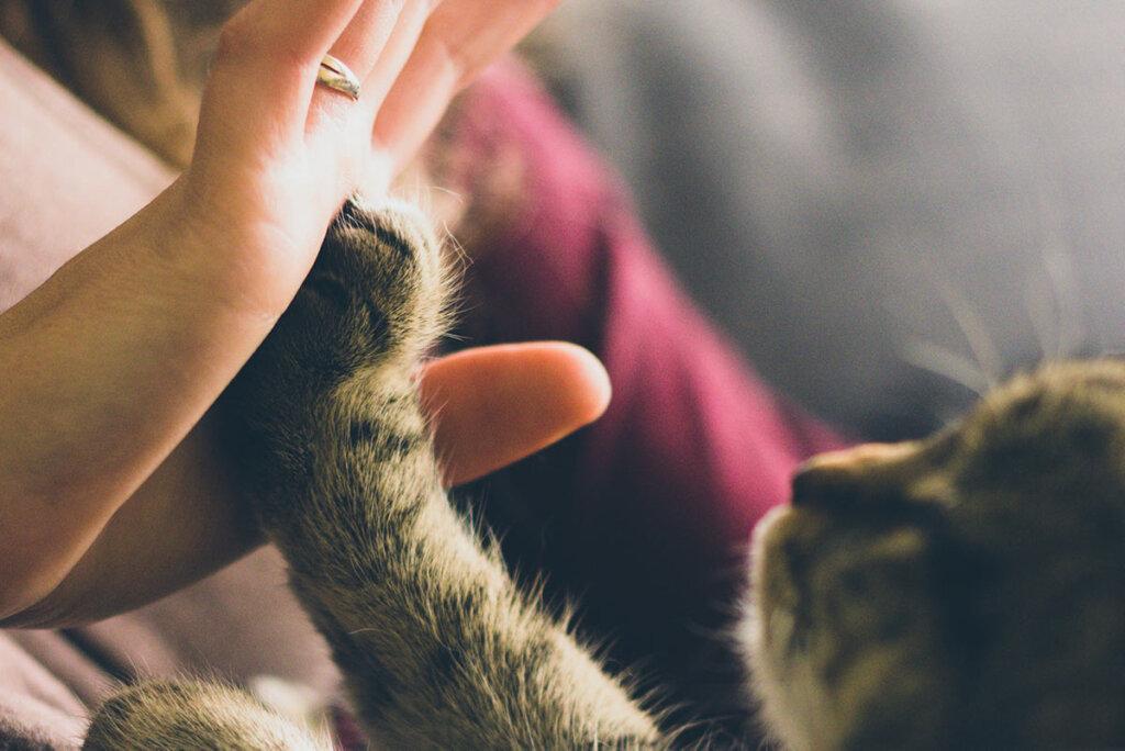 Katzenpfoto berührt Menschenhand