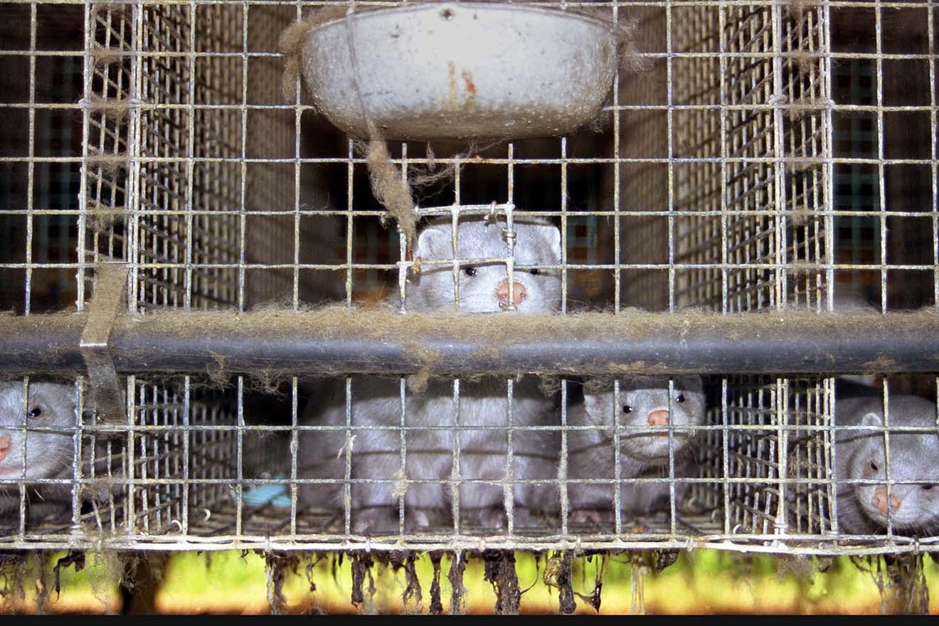 Pelzfarmen in Italien: Petition für die Schließung jetzt unterschreiben
