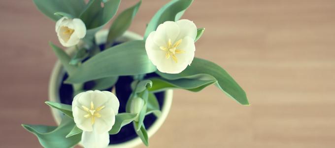 Die 20 giftigsten Zimmerpflanzen für Tiere
