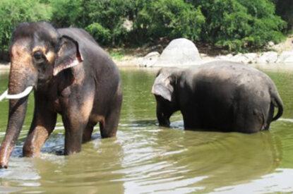 Elefanten im Fluss
