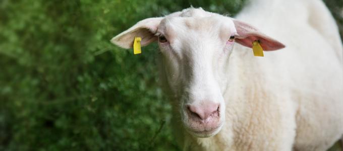 Tierquälerei melden: Seien Sie ein Held für die Tiere!
