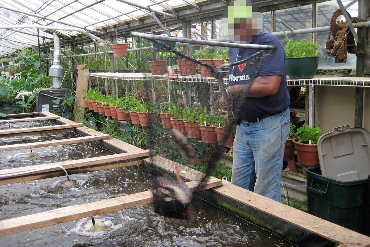 Aquaponik-Farm: Massentierhaltung von Fischen in Bayern geplant