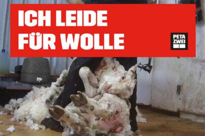 Ich leide fuer Wolle Plakat