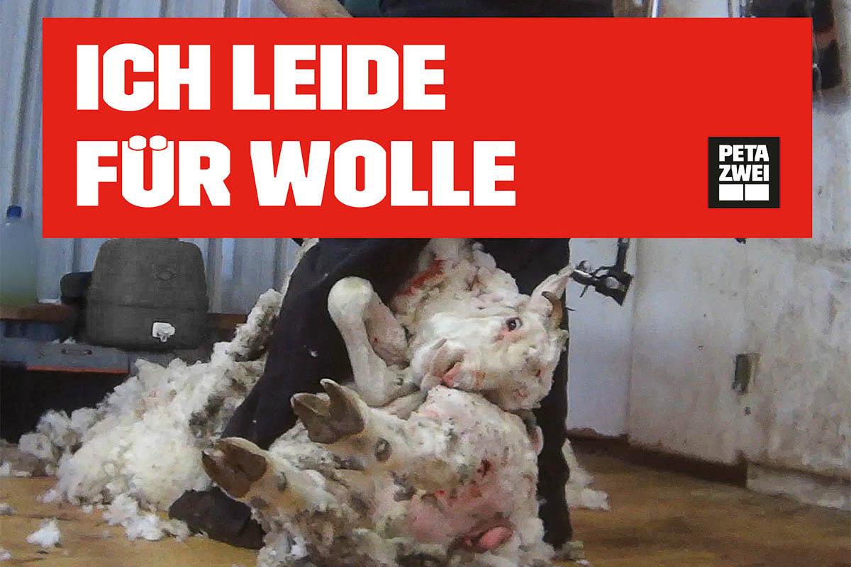 Aktion gegen Wolle: Kostenloses Demopaket jetzt bestellen!