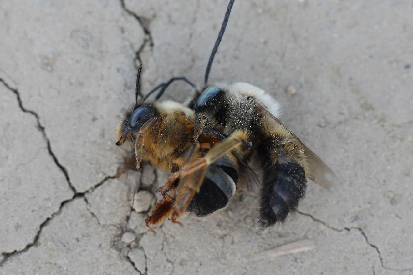 Das große Bienensterben: Gründe und Auswirkungen