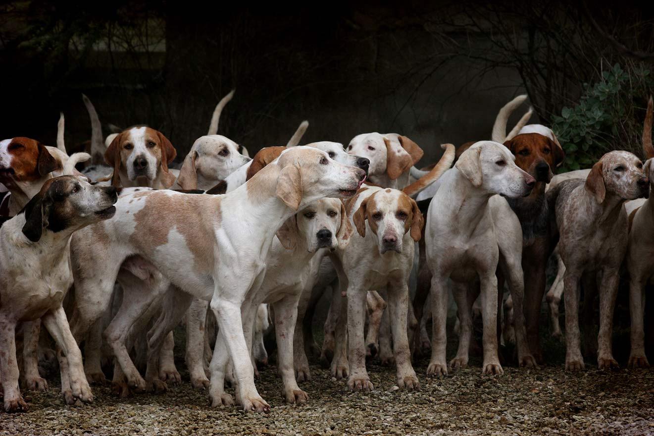 Illegale Hundekämpfe in Deutschland: Kampf um Leben und Tod
