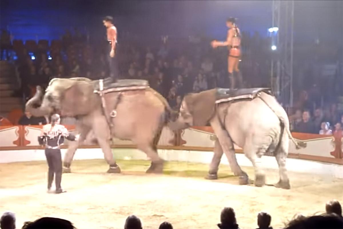 Ursache ungeklärt: Zwei Elefanten von Zirkus-Familie Casselly tot