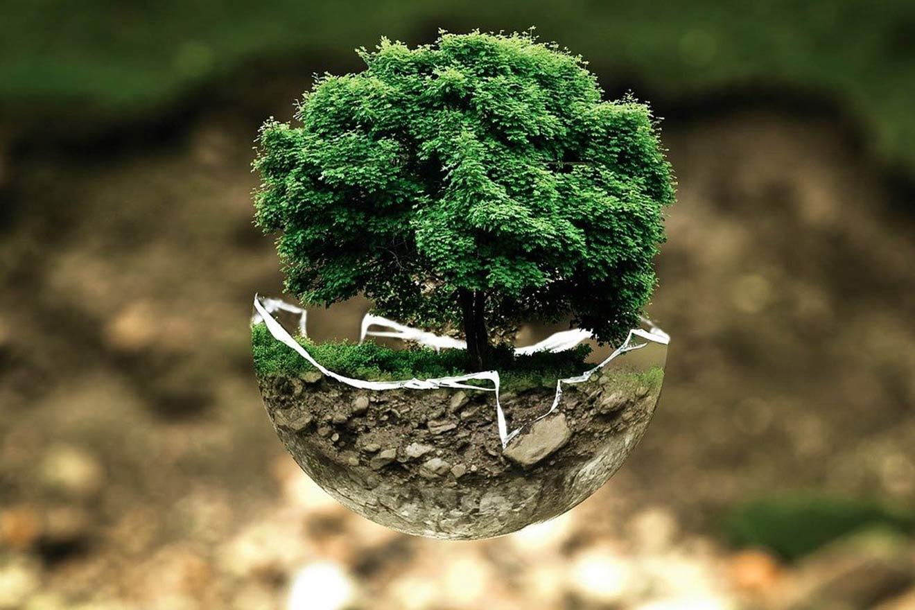 Studie: Mit einer veganen Welt lassen sich 16 Jahre CO2-Emissionen kompensieren