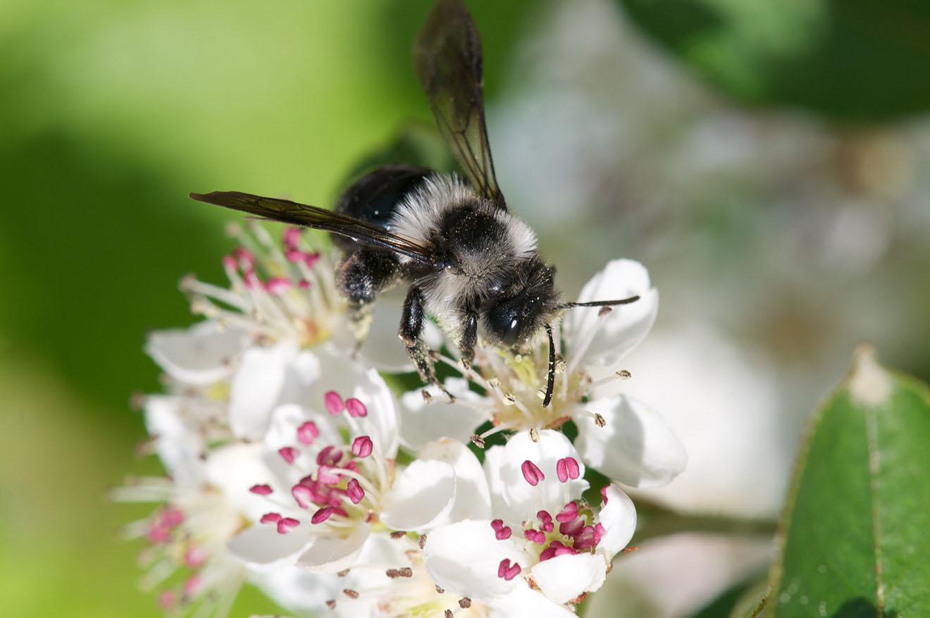7 Wege, Bienen zu helfen: Bienenfreundliche Blumen pflanzen & Co.