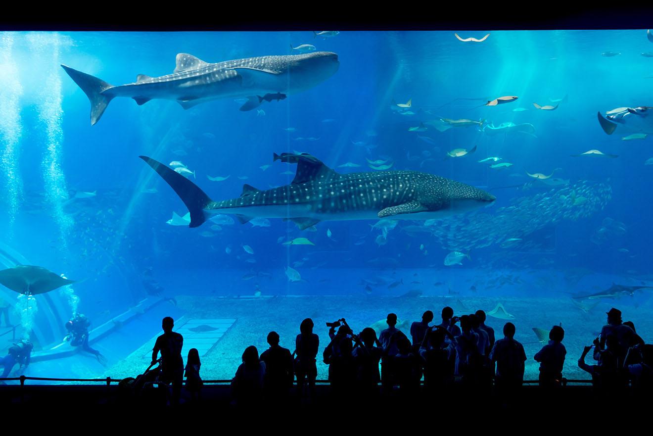 Erfolg: NEIN zum Haigefängnis Shark City in Pfungstadt