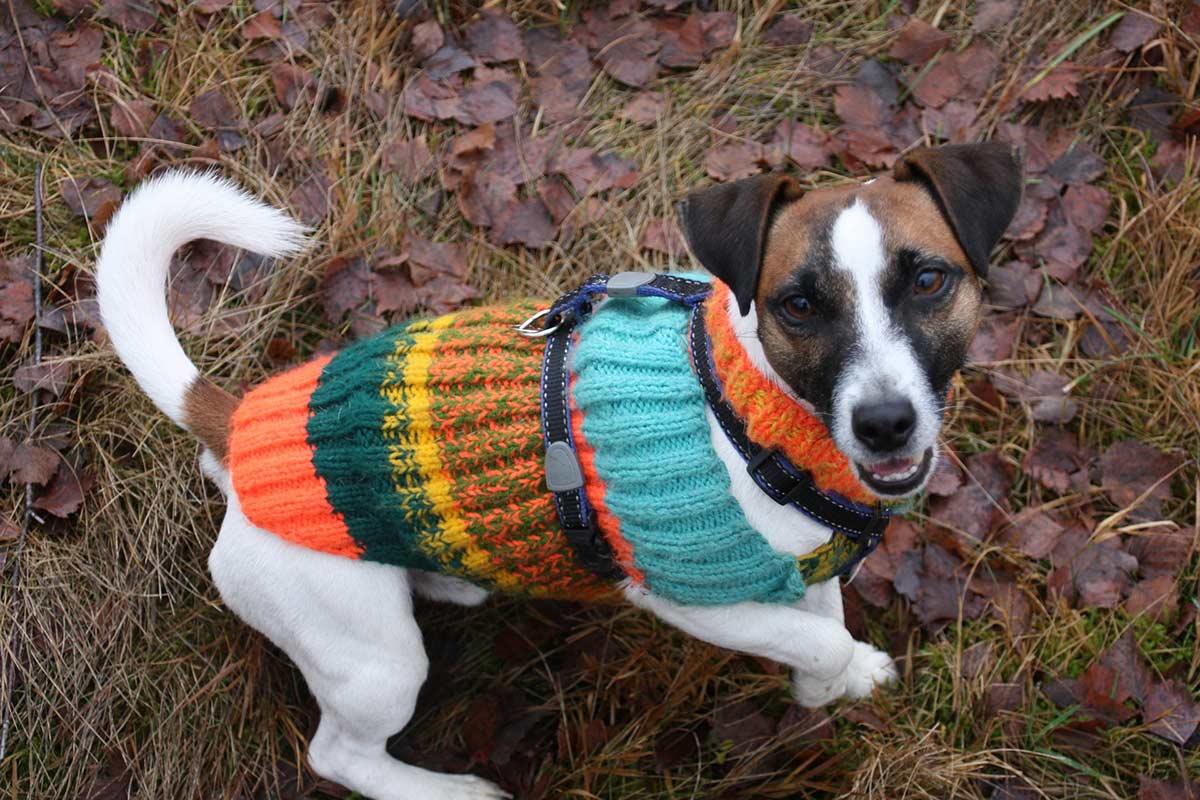 Hundebekleidung im Winter: Wann sind Mäntel und Jacken sinnvoll?
