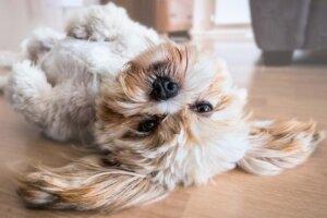 Hund liegt auf dem Rücken