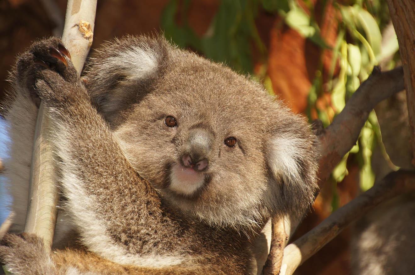 Klimawandel: Diese 7 Tierarten sind besonders bedroht