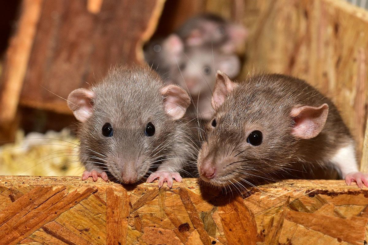 Endlich weniger Tierleid: Österreich fördert tierfreie Forschung stärker