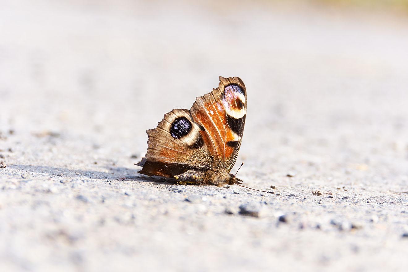 Insektensterben: Fakten, Gründe – und was wir dagegen tun können