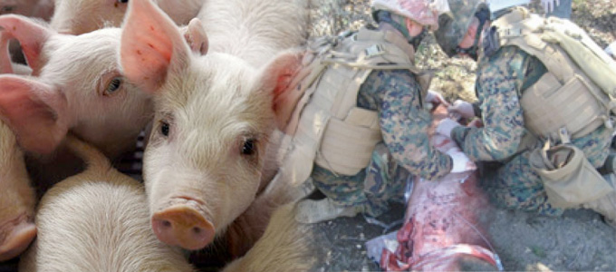 Tierversuche im Militär: Trauma-Training in der EU beenden!
